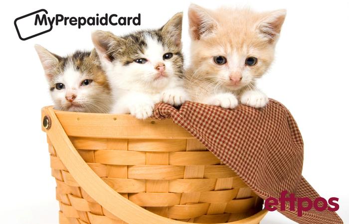 MyPrepaidCard Kittens