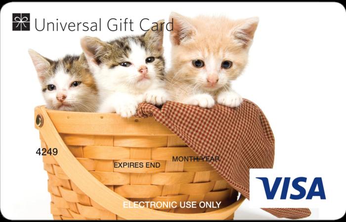 Large three kittens ugc visa card